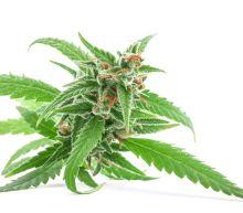 Could Aurora Cannabis Turn Its Q3 Success Into Long-Term Growth?