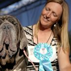 Drop Dead Grotesque! 'Gassy' Mastiff Martha Reigns Supreme at 2017 World's Ugliest Dog Contest