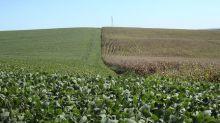 Justiça aceita pedido de recuperação judicial da Fertilizantes Heringer