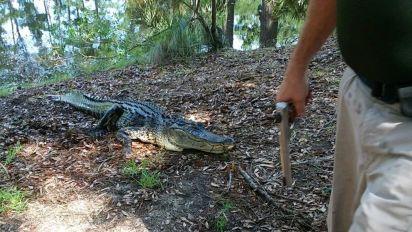 Frau führt Hund aus und wird von Alligator getötet
