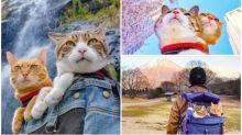 【有片】日本貓奴IG旅貓日記 8年走遍過千景點