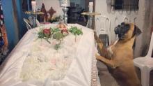 Fiel hasta el final… Esta perrita pasó la noche entera en el funeral de su dueña