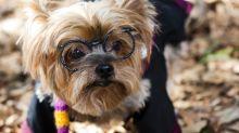 Jovem usa feitiços de 'Harry Potter' para treinar cachorro