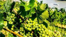 10 destinos imprescindibles si amas el vino