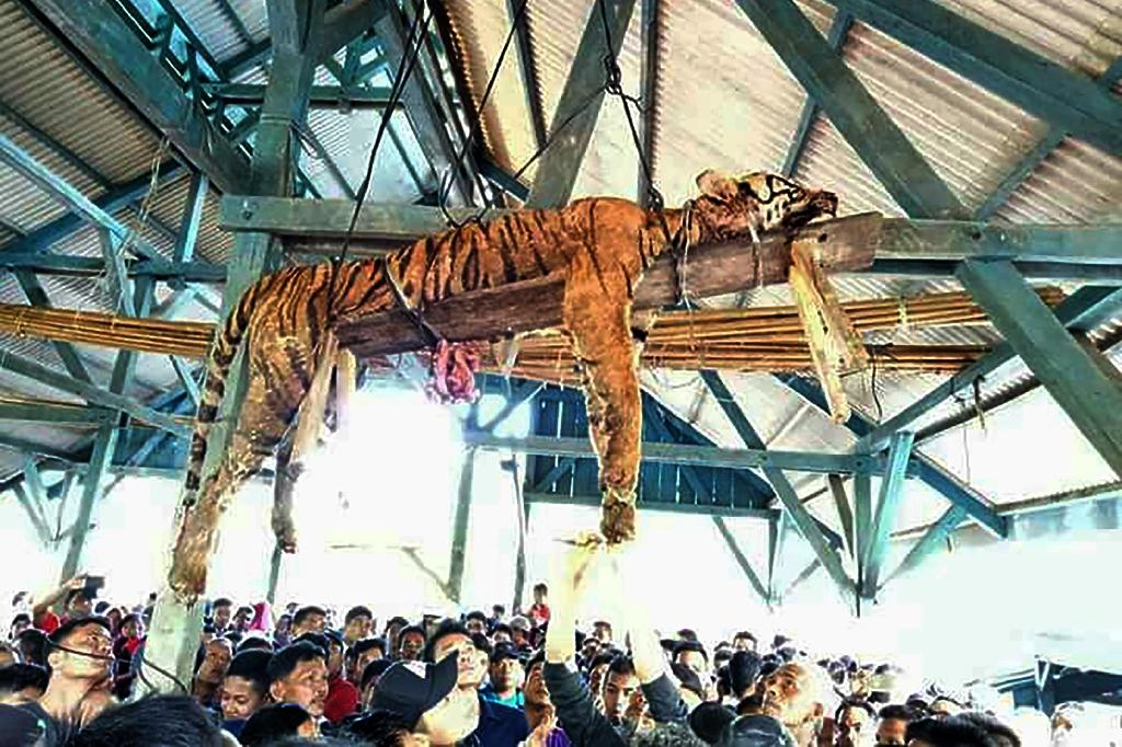 Some internal organs were missing from the tiger's body, authorities said