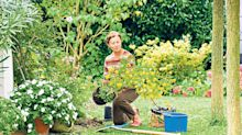 Gardening jobs to do now before things get extreme; pruning roses, moving shrubs and mildew