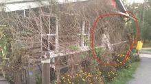 'So creepy': Woman left shaken by mystery figure in photo