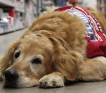 This veteran needed to work with his service dog so Lowe's hired them both
