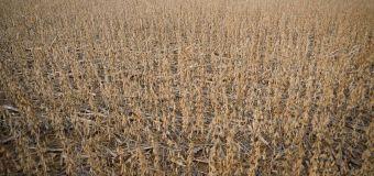 Cosecha de soja avanza con velocidad en Argentina gracias a clima favorable