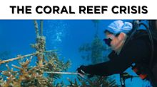 These Floridians are helping save the world's 3rd largest coral reef