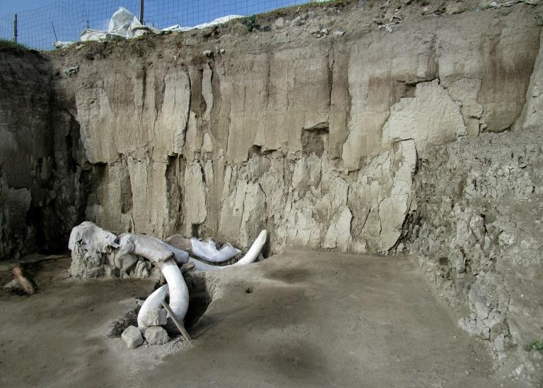 800 mammoth bones unearthed in Mexico
