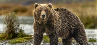 Park suffers first known fatal bear mauling