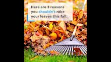 Raking leaves this fall? If you leave them be, you're doing the planet a favor