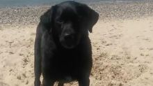 Owner Shares Scary Warning After His Dog Dies From Saltwater Poisoning