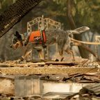 Death Toll Rises To 63 In Northern California Camp Fire, 631 Now Unaccounted For