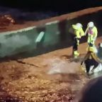 Rescuers free a whale in London's River Thames