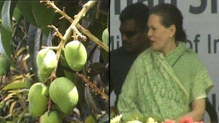 """Now a new mango, """"Sonia Gandhi"""", from Malihabad"""