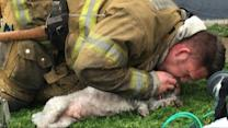 Firefighters revive dog with mouth-to-snout