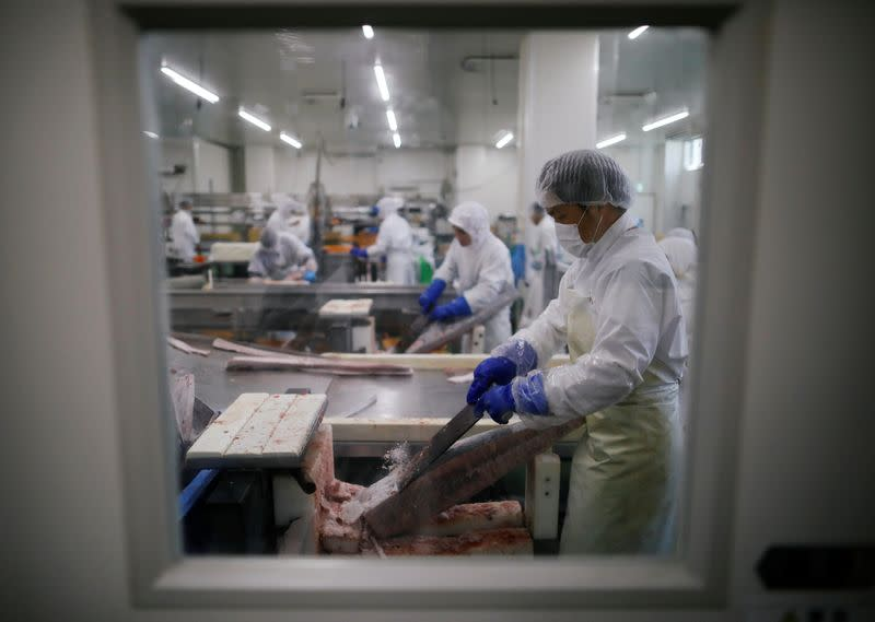 Employees of Misaki Megumi Suisan Co. process frozen tuna for shipping in Miura, Japan