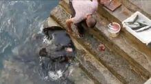 El reverso nocivo del vídeo entrañable entre un pescador y una raya
