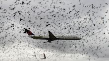 Give thanks for the fowl shot into jet engines in the name of safety