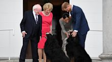 The Queen's corgis aren't the only dogs in love with Meghan Markle