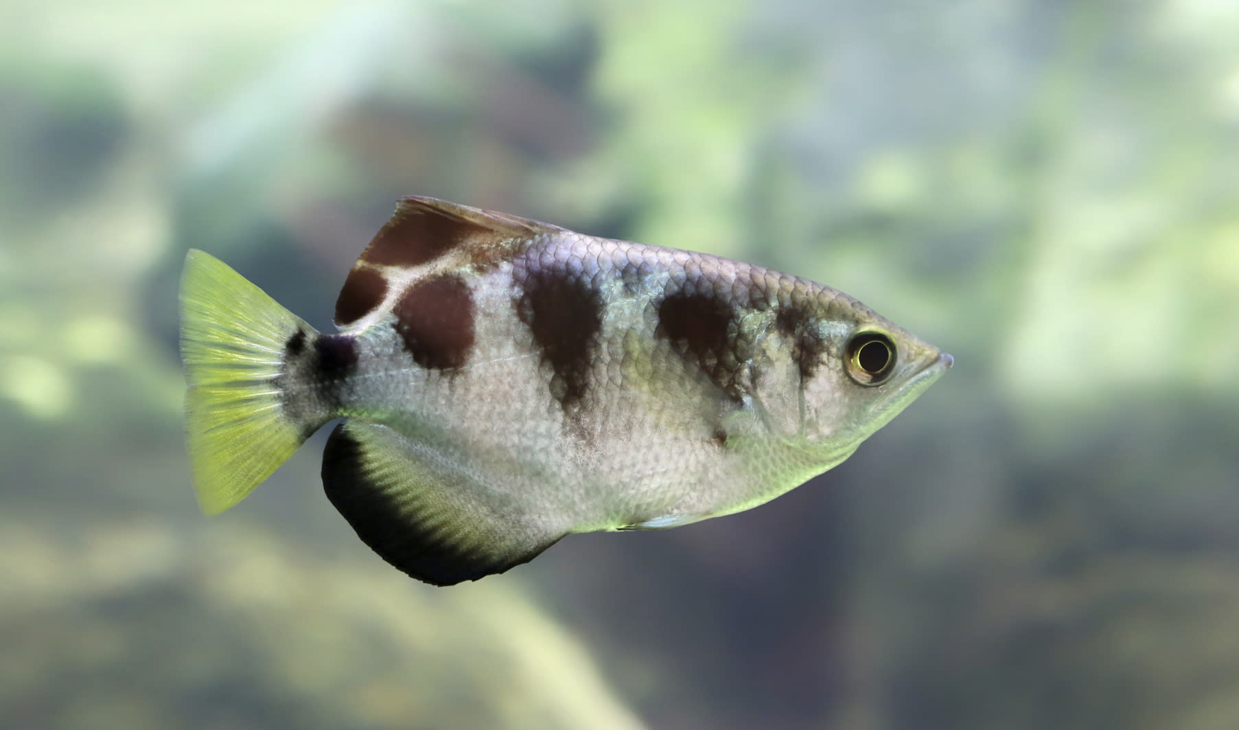 39 smart 39 tropical fish can recognise human faces for Are fish smart