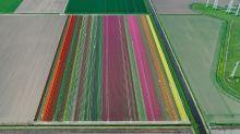 La belleza de los campos de tulipanes, desde las alturas