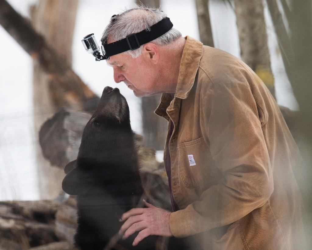 Ben Kilham, a wildlife biologist, takes in orphaned bear cubs until they are old enough to fend for themselves (AFP Photo/Don EMMERT)