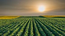 Organic Soybean Acres Planted are Likely to Rise