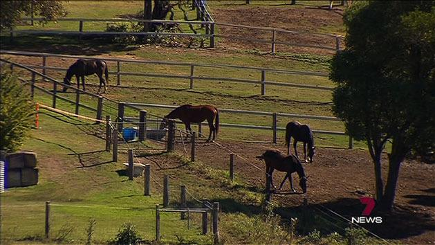 Rush for Hendra vaccine after death