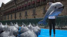 Expertos sugieren cercar zona de vaquitas marinas en México