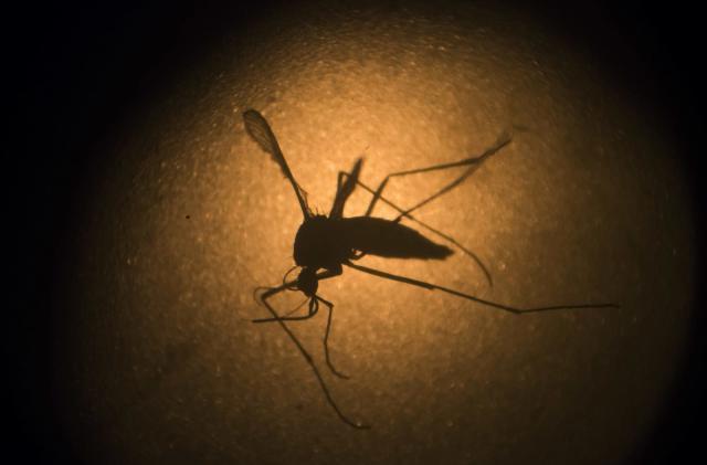 Alphabet is working to squash the Zika virus, too