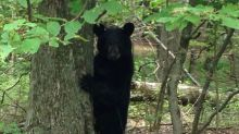 Colorado rangers kill bear suspected of mauling child