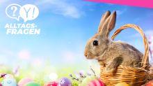 Alltagsfrage: Was hat der Hase mit Ostern zu tun?