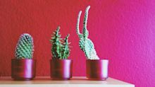 If You Live in an Apartment, You Need One of These Plants