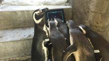 Aqui estão as provas de que todos os animais adoram tecnologia