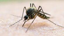 Tiere: Die Mücken warten auf warmes und feuchtes Wetter