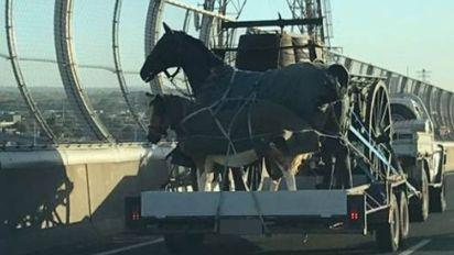 True story behind 'horrific' photo of horses on trailer