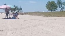 Woman captures eerie animal behavior on video during beach trip: 'I can't handle this'