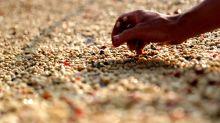 Brasil alcanzó en el último año su segundo mayor récord de exportaciones de café