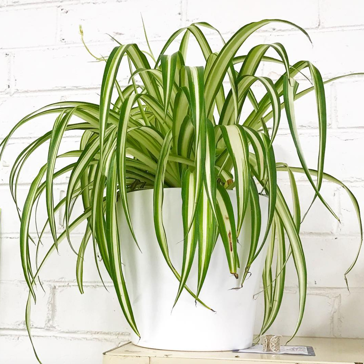 Easy care plants that stay alive with little love for Plants that need little maintenance