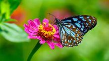 El apocalipsis de 400.000 especies de insectos que amenaza la vida en el planeta