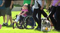 Hundreds Take Part In Walk-N-Roll For Spina Bifida