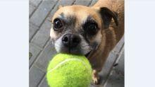 'I cherished her': Owner grieving after possible dog poisoning in east end park