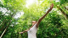 Del Mindfulnes al Shinrin-yoku o por qué salir al bosque una vez por semana