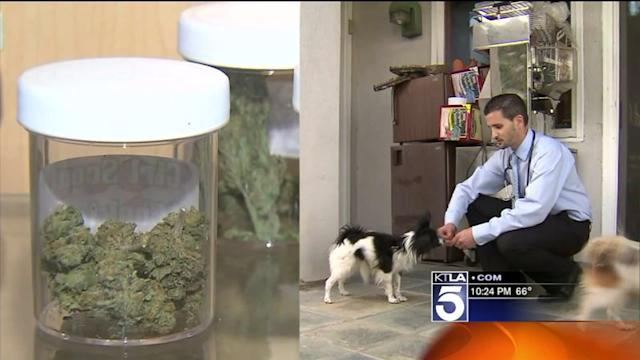 Local Vet Recommends Pot for Pets in Pain