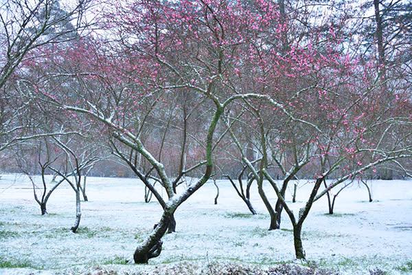 武陵農場雪景 (圖/武陵農場 Wuling Farm)