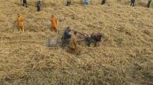 China tiene abundantes suministros de soja, volatilidad de precios es improbable: ministerio