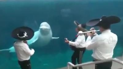 Whale Enjoys Mariachi Band